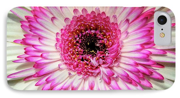 Pink And White Gerbera Daisy Phone Case by Jim and Emily Bush