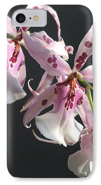 IPhone Case featuring the photograph Pink And White Orchid by Alfred Ng