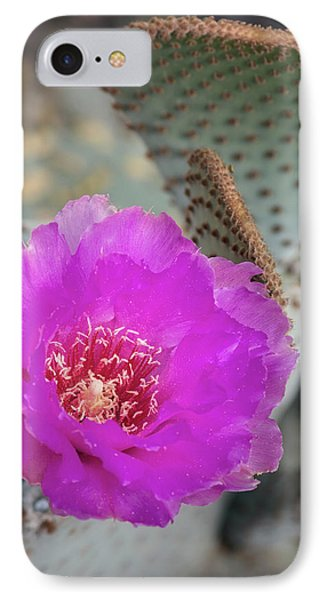 IPhone Case featuring the photograph Pink Beavertail Cactus  by Saija Lehtonen
