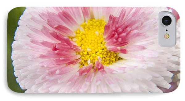 Pink Button Flower IPhone Case by Darleen Stry
