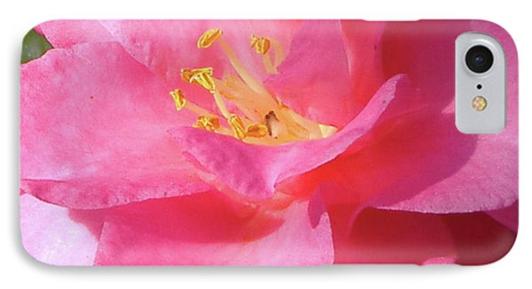 Pink Camelia IPhone Case by Diane Ferguson