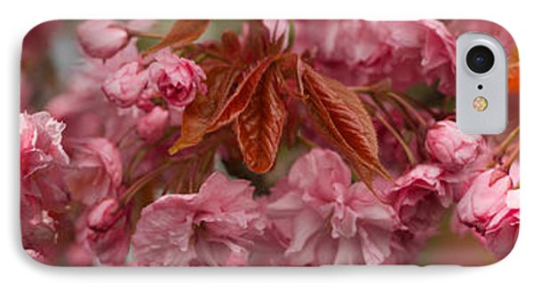 Pink Cherry Blossoms In Spring IPhone Case by Panoramic Images