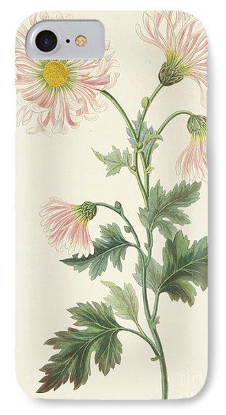 Pink Chrysanthemum IPhone Case by Margaret Roscoe
