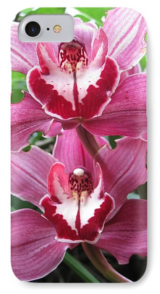 IPhone Case featuring the photograph Pink Cymbidium Orchids by Alfred Ng