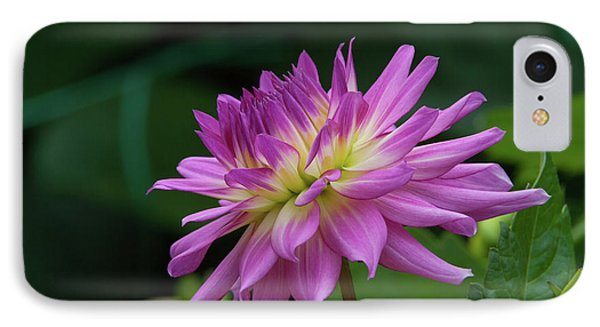 Pink Dahlia IPhone Case by Glenn Franco Simmons