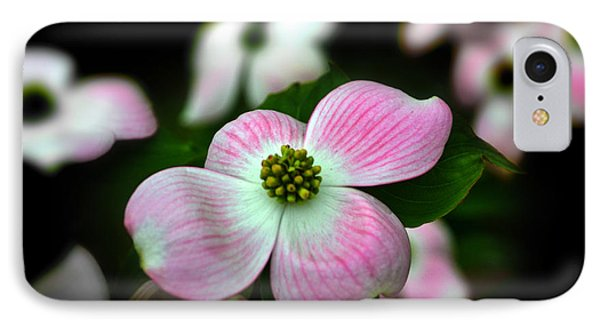 Pink Dogwood 003 IPhone Case by George Bostian