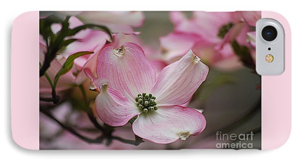 Pink Dogwood 20120415_70a IPhone Case by Tina Hopkins