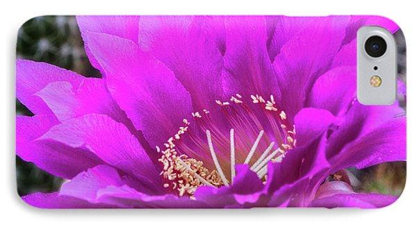 IPhone Case featuring the photograph Pink Echinopsis Bloom  by Saija Lehtonen