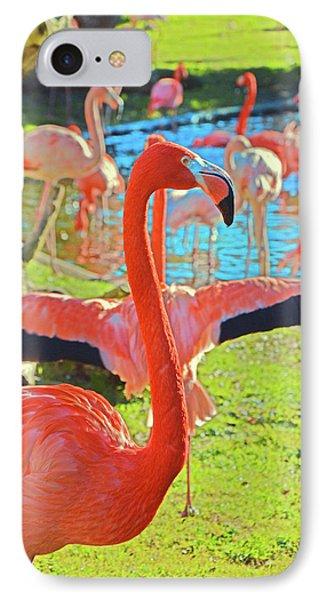 Pink Flamingos. IPhone Case