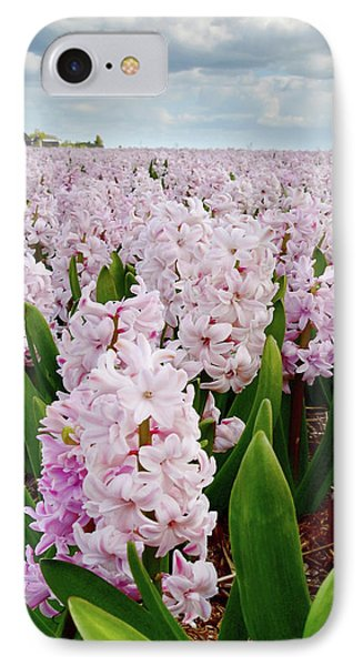 Pink Hyacinth  IPhone Case by Mihaela Pater