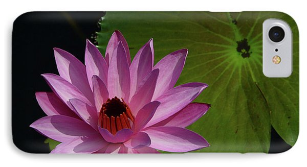 Pink Lotus IPhone Case by Evelyn Tambour