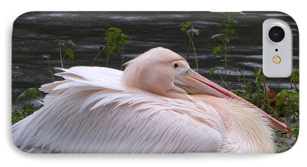 Pink Pelican IPhone Case by Margaret Brooks
