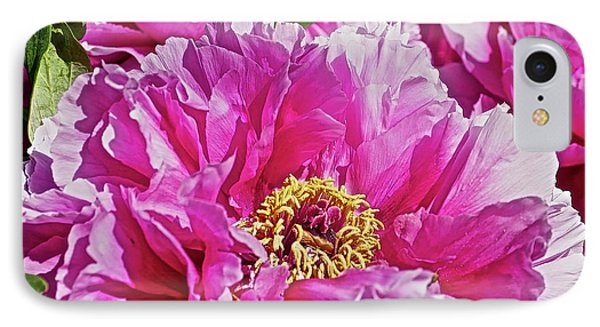 Pink Peony IPhone Case by Joan Reese