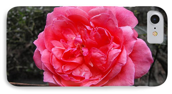 Pink Rose IPhone Case by Adam Cornelison