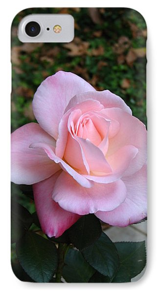 IPhone Case featuring the photograph Pink Rose by Carla Parris