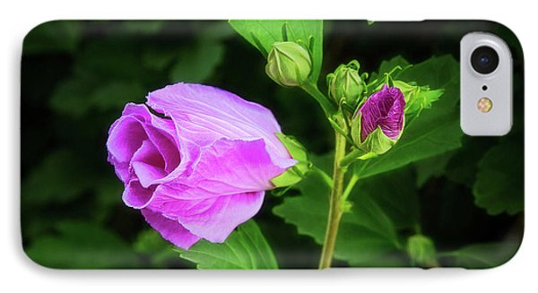 Pink Rose Of Sharon IPhone Case