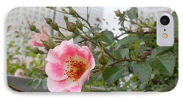 Pink Rose Of Tulsa Phone Case by Susan Vineyard