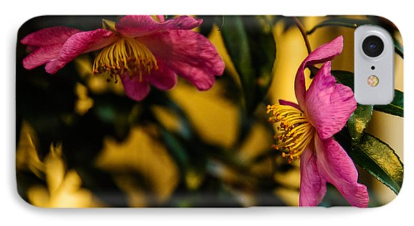 IPhone Case featuring the photograph Pink Sasanquas  by John Harding