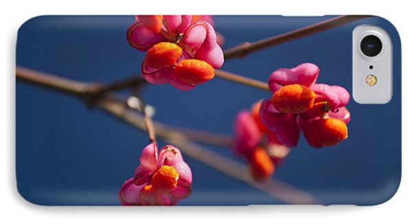 Pink Spindle Fruit IPhone Case by David Isaacson