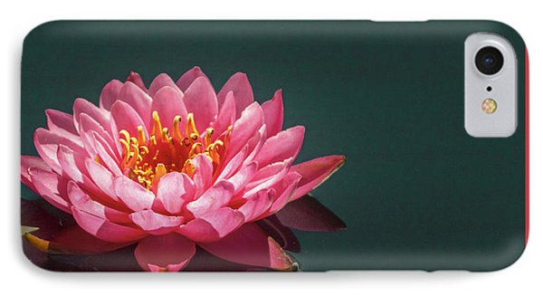 Pink Water Lily  IPhone Case by Christina Lihani