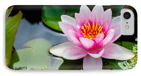 Pink Waterlily IPhone Case by Daniel Precht