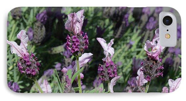 Pinkish Purple Spanish Lavender IPhone Case by Carla Parris