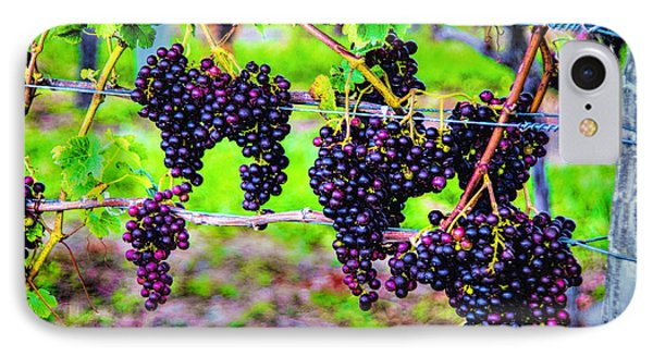 Pinot Noir Grapes IPhone Case by Rick Bragan
