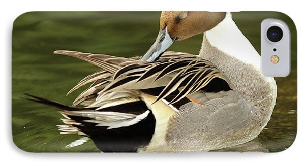 Pintail Drake Grooming IPhone Case by Max Allen