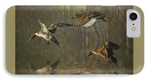 Pintail Ducks IPhone Case by Brian Tarr
