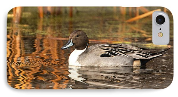 IPhone Case featuring the photograph Pintail by Kelly Marquardt