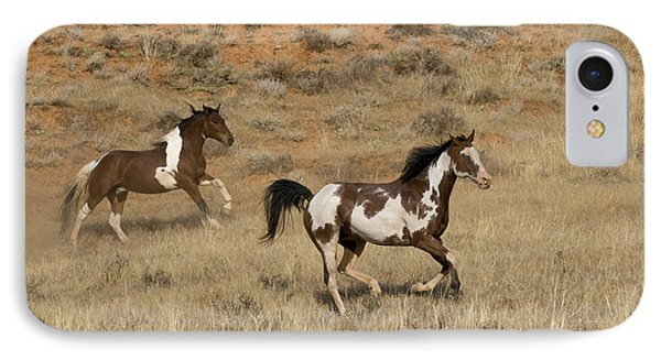 Pinto Horses IPhone Case by Jean-Louis Klein & Marie-Luce Hubert