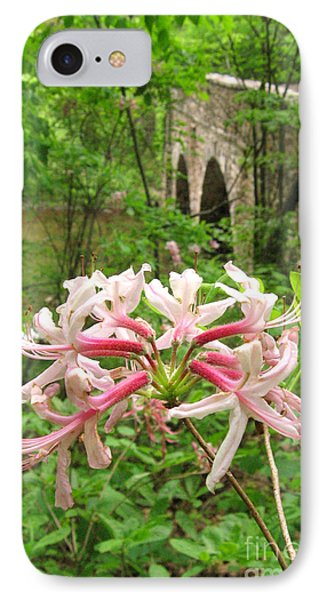 Pinxterbloom Azalea At Bowmans Hill IPhone Case by Anna Lisa Yoder