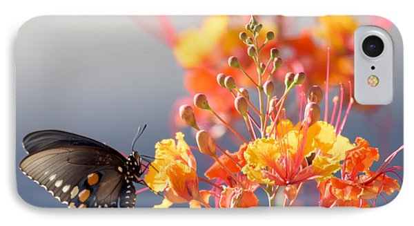 Pipevine Swallowtail IPhone Case by Dan McManus