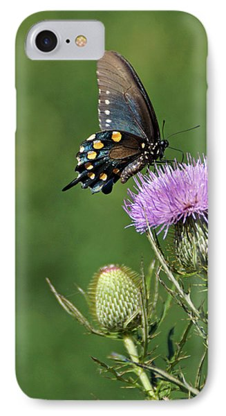 IPhone Case featuring the photograph Pipevine Swallowtail by Sandy Keeton