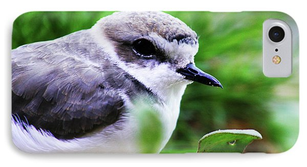 IPhone Case featuring the photograph Piping Plover by Anthony Jones