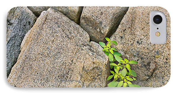 Plant In Granite Crevice Abstract IPhone Case