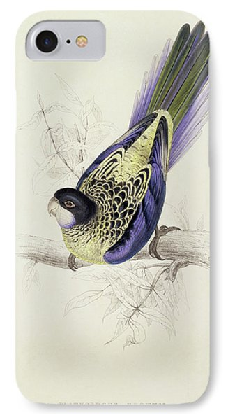 Platycercus Brownii, Or Browns Parakeet IPhone Case by Edward Lear