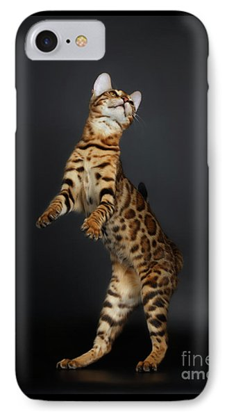 Playful Female Bengal Cat Stands On Rear Legs IPhone Case by Sergey Taran