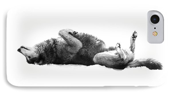 Playful Gray Wolf Photo IPhone Case