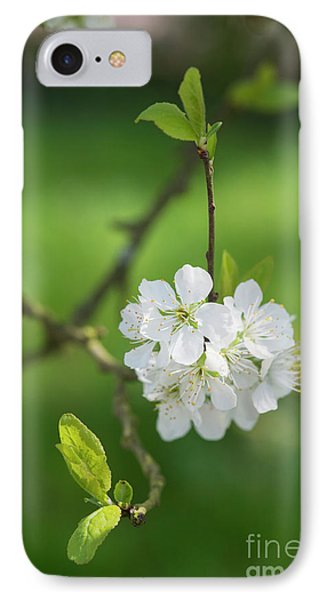 Plum Blossom IPhone Case by Tim Gainey