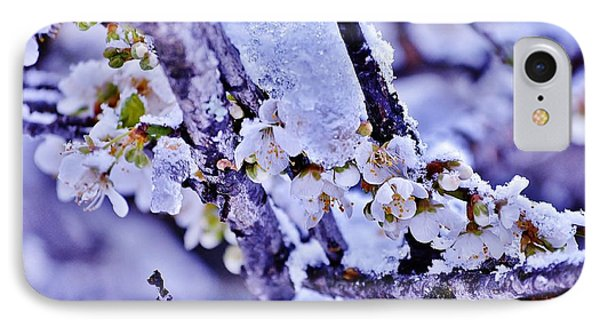 Plum Blossoms In Snow IPhone Case