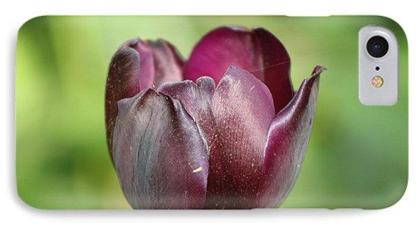 Plum Tulip IPhone Case