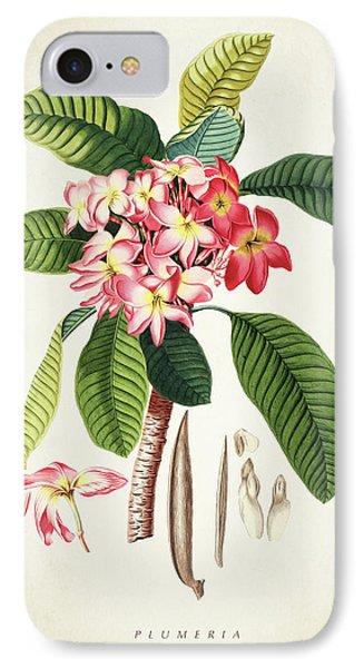 Plumeria Botanical Print IPhone Case by Aged Pixel