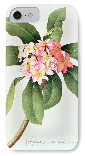 Plumeria Phone Case by Georg Dionysius Ehret