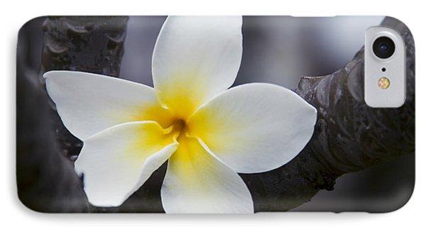 Plumeria Obtusa Singapore White Blossom IPhone Case by Sharon Mau