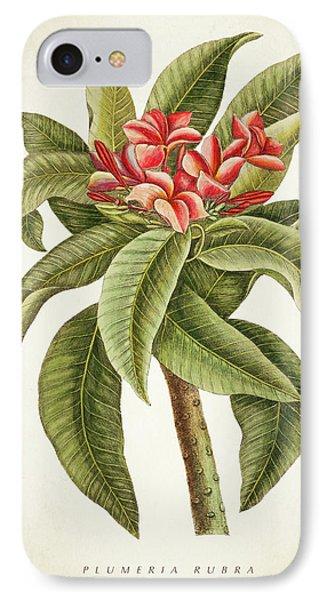 Plumeria Rubra Botanical Print IPhone Case by Aged Pixel