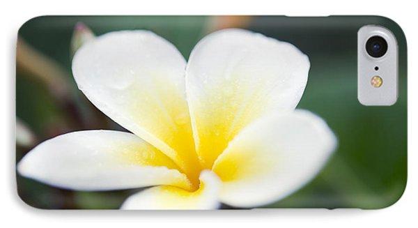 Plumeria Rubra Star White IPhone Case by Sharon Mau