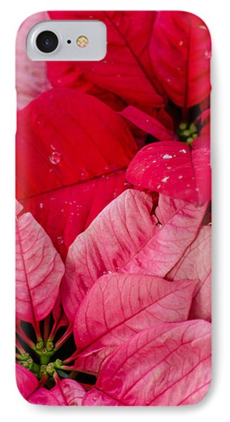 Poinsettias For The Holidays IPhone Case