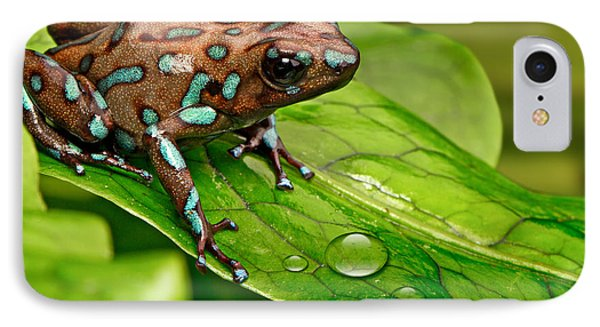 poison art frog Panama IPhone Case by Dirk Ercken