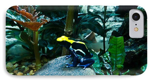 Poison Dart Frog Poised For Leap IPhone Case